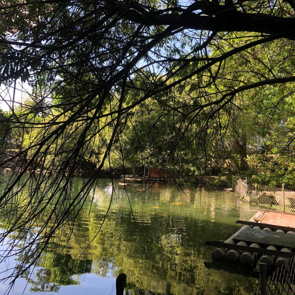 宜蘭住宿-水岸森林